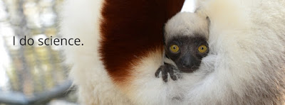 I do science - Red tailed Lemur