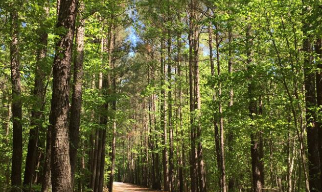 The American Tobacco Trail with tall trees on either side of the path