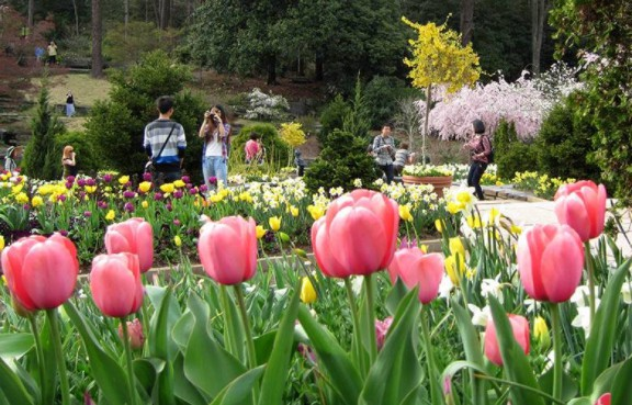 Terrace Gardens at The Sarah P. Duke Gardens with pink tulips and people in the background
