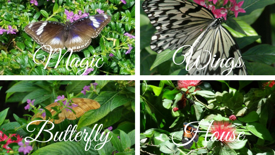 Magic Wing's Butterfly House